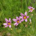 写真: 201105flower 157