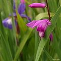 写真: 201105flower 112