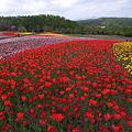 Photos: 20100605_123804_滝野すずらん丘陵公園
