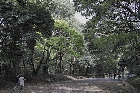 参道(SPPオート現像)