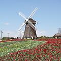 Photos: オランダっぽいかも♪