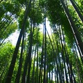 Photos: Bamboo