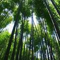 Photos: Bamboo