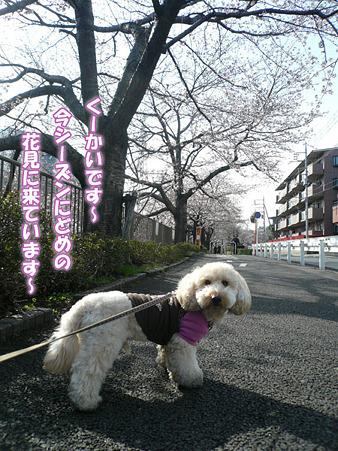 くーかいとお花見散歩 2010