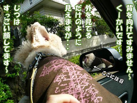 100430 くーかい of the day