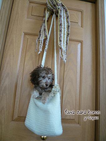 おチビ犬のためのニットバッグ 5