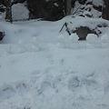 Photos: 今日の雪は固まらない