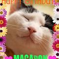 写真: マカロンの誕生日!