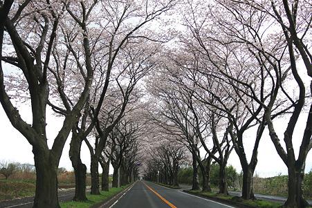 2010.04.02 瀬谷 海軍道路