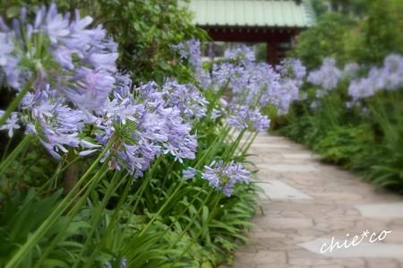 鎌倉-038