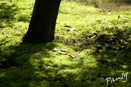 苔も新緑・・