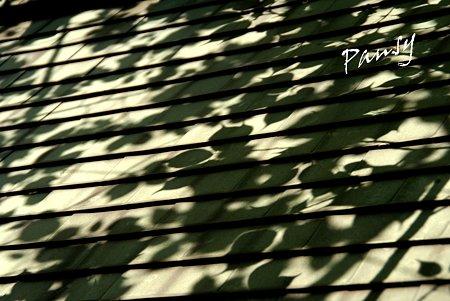 揺れる葉影・・
