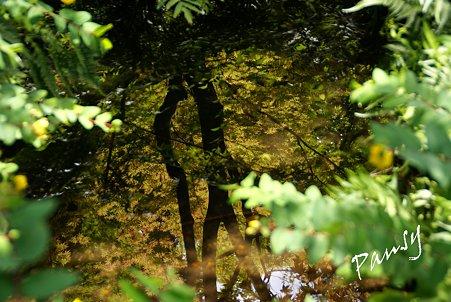 池に映して・・吉亭庭園にて・・2