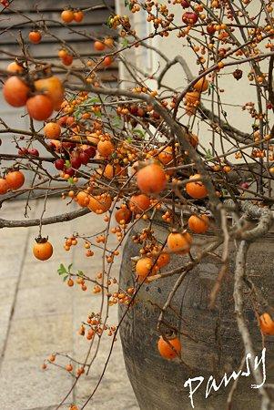 柿色の彩・・ 伏見の街角・・3