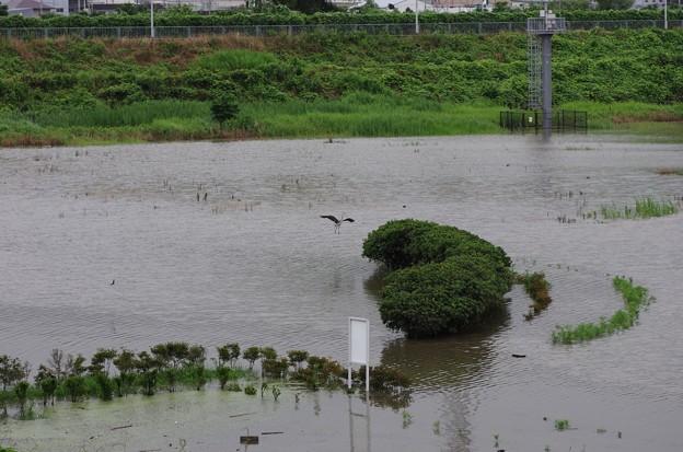 前日の大雨で一面水浸し