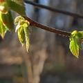 Photos: Wiosna tuz tuz