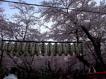 2011年4月10日 平野神社その10