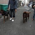 Photos: 一緒にお散歩