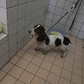Photos: dog'ssmileの保護犬