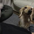このこはうちの保護犬の莉乃ちゃんです