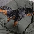 Photos: この子もうちの保護犬の美遊です