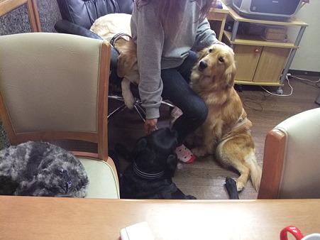 犬にモテモテの預かりママ