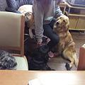 Photos: 犬にモテモテの預かりママ