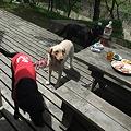 Photos: 犬達に囲まれ