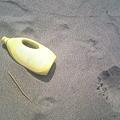写真: 小針浜ビーチクリーン (3)