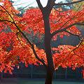 松戸市・21世紀の森と広場