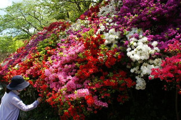 写真: ツツジの公園!(110429)