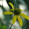 Photos: たくましく咲く