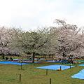 100404-8井の頭公園