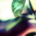 写真: 葉っぱと雫2