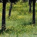 Photos: 黄色い木立