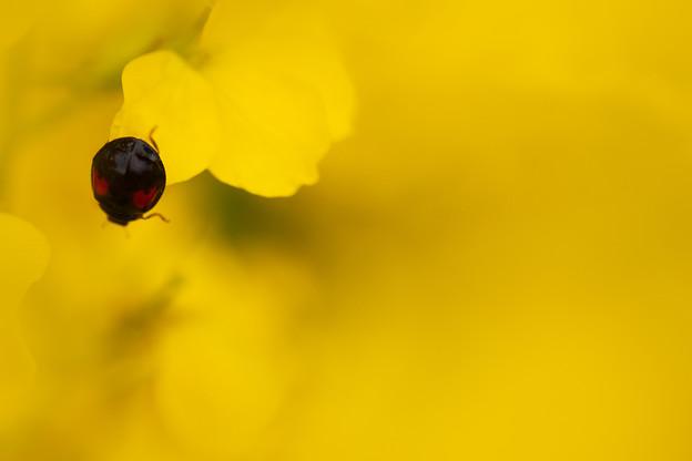黄色の中の小さな心
