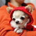 サンタ?赤頭巾?