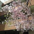 Photos: 研修会場の入口にあったシダ...
