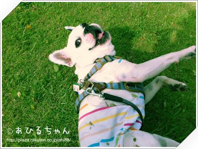 写真: 20110523_03