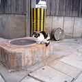 写真: 鉄輪温泉街の猫