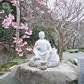 写真: 鎮国寺の緋寒桜と梅(6)