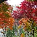 写真: 一目八景~見晴らし台への登山道(3)