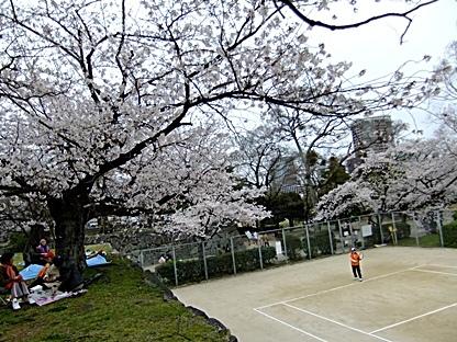 桜を見ながらのテニス