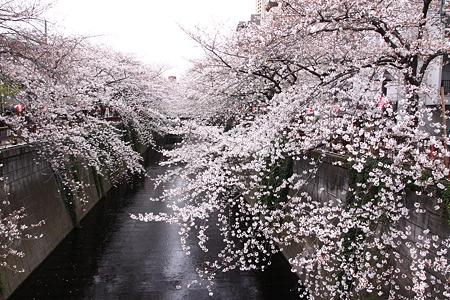 目黒川(2)