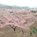 Photos: 桃源郷
