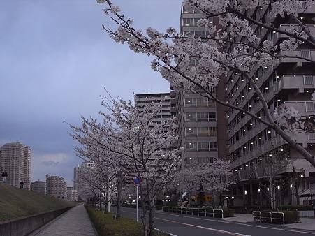 南千住の桜 2010-4-3 16
