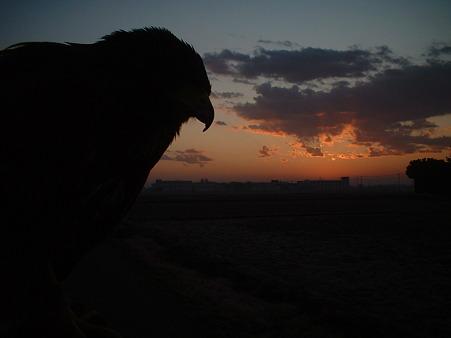 2009年最後の夜明けと鷹