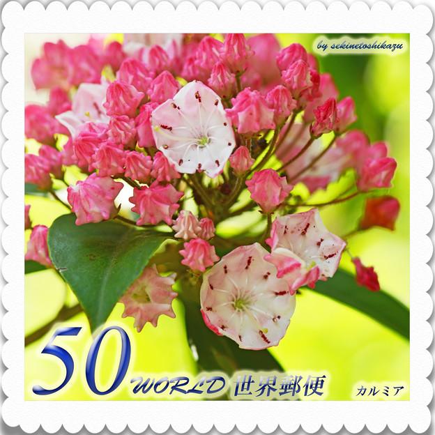 <花切手*カルミアの花*大家族>