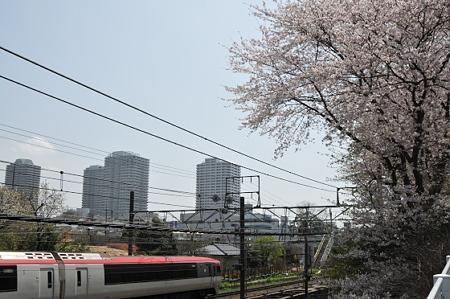肥田牧場前の桜 02