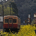 写真: 小湊鉄道の桜 2010 01